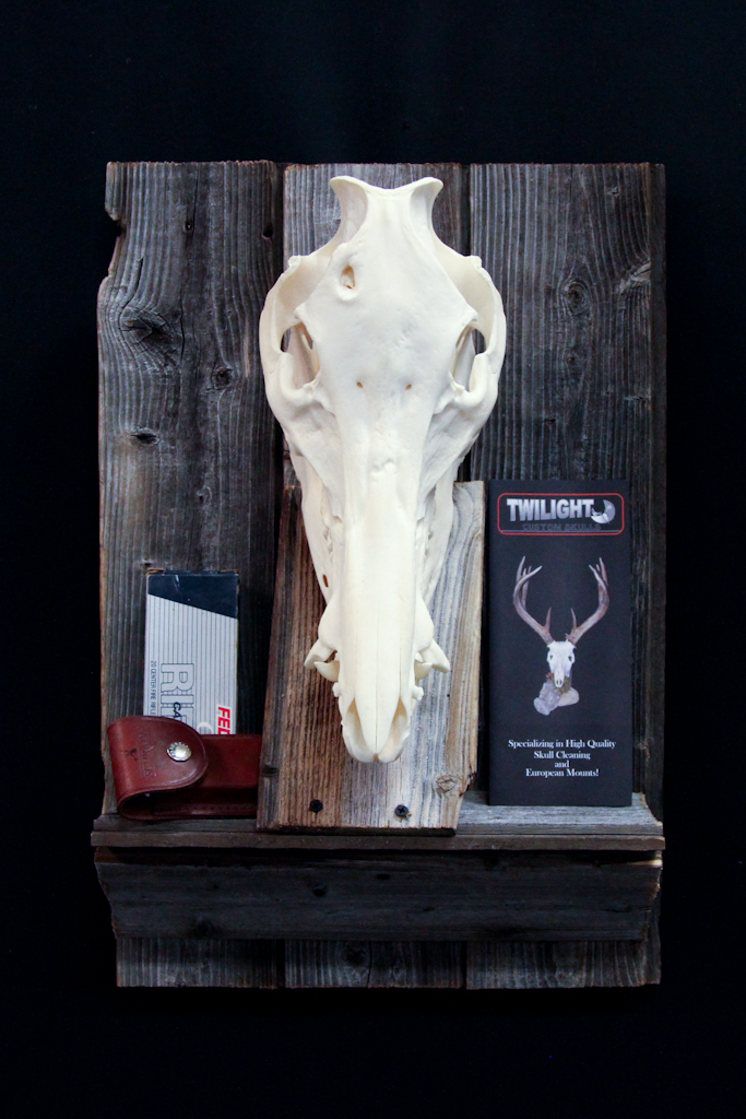 Wild Boar on Barn Board - 032