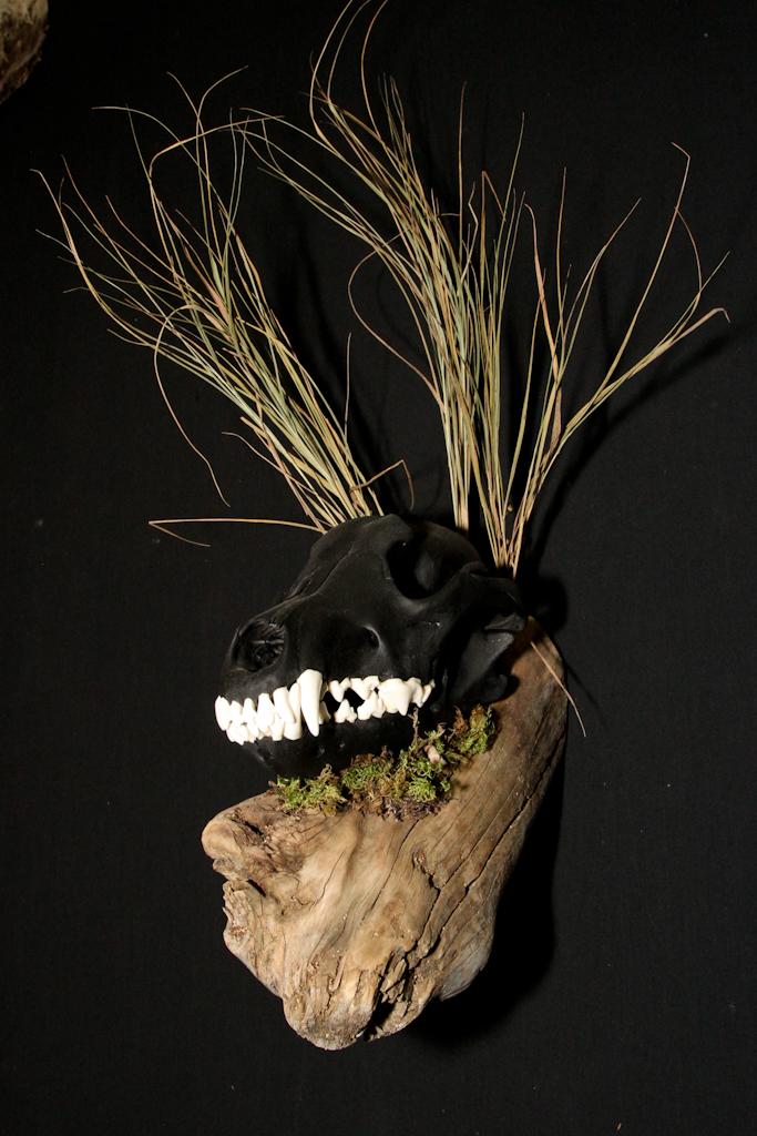 Black Wolf on Driftwood - 033