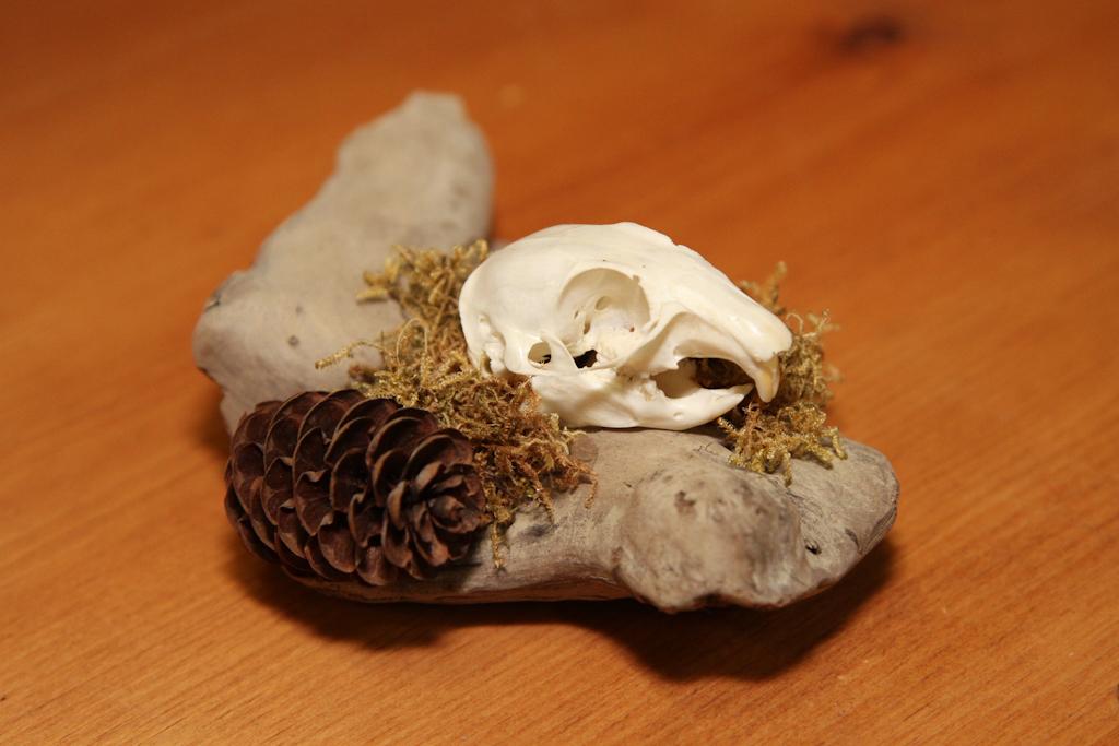 Gopher on Desk Driftwood - 043