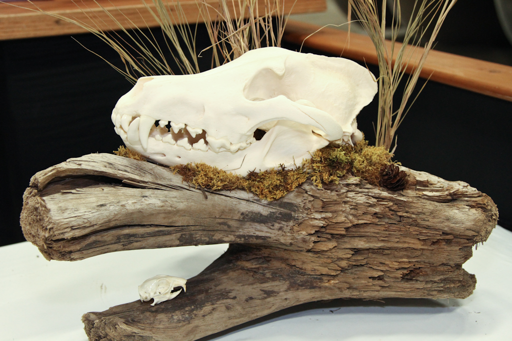 Wolf & Gopher on Driftwood - 053