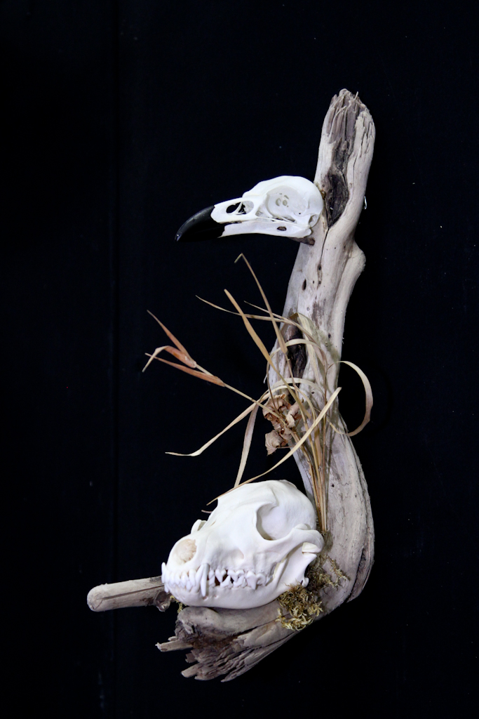 Coyote & Raven on Driftwood - 057