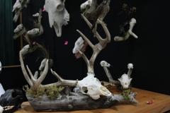 Whitetail Deer - 002