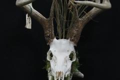 Whitetail Deer /w Driftwood - 005