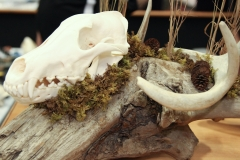 Wolf /w Deer Shed on Driftwood - 028
