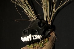 Black Wolf on Driftwood - 033