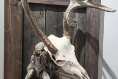 Whitetail Deer on Driftwood & Barn Board Mount - 061