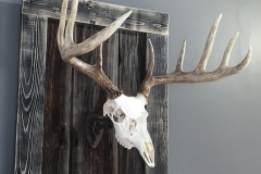 Whitetail Deer on Driftwood & Barn Board Mount - 064